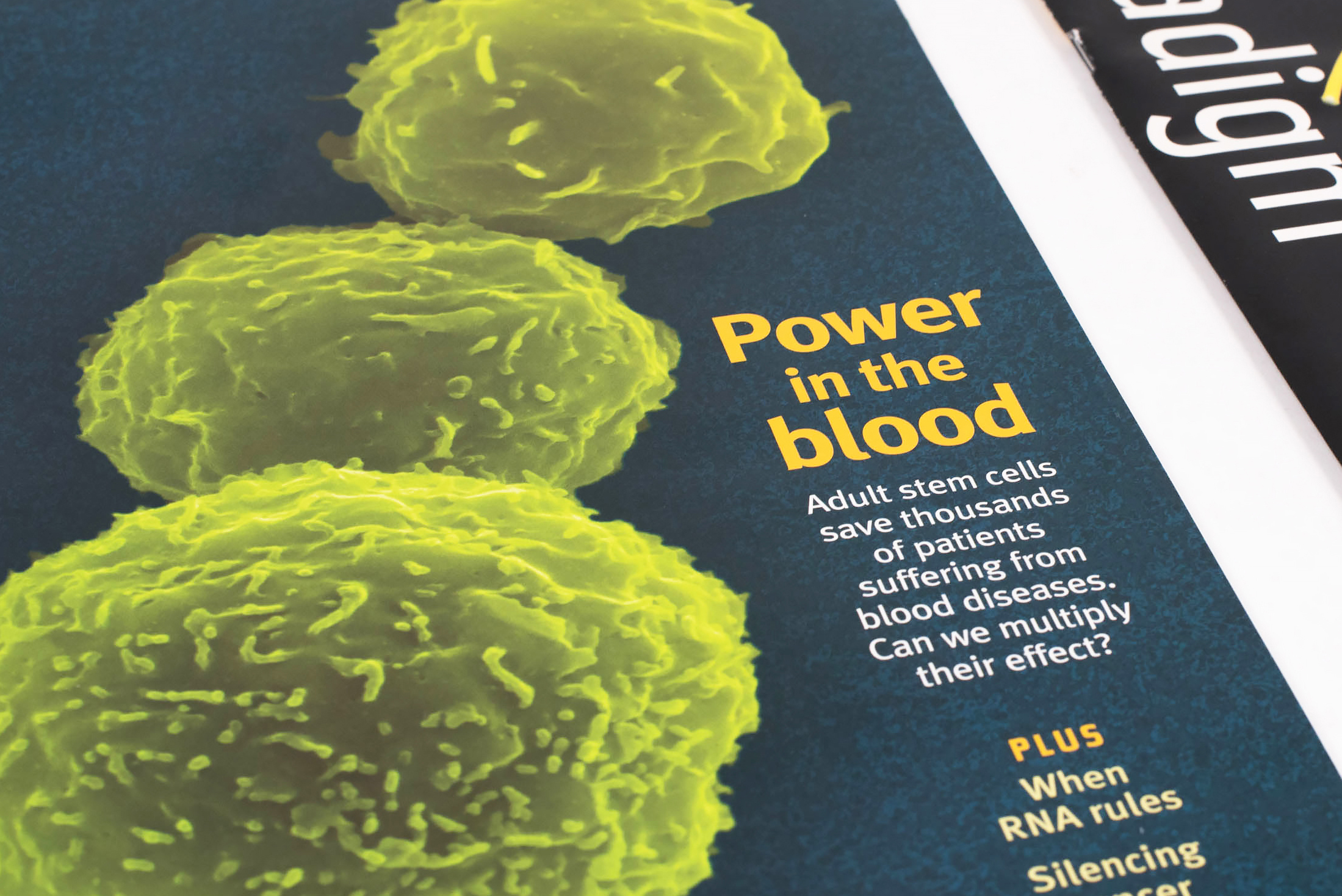 Whitehead Institute for Biomedical Research Paradigm Magazine cover: Power in the Blood close up